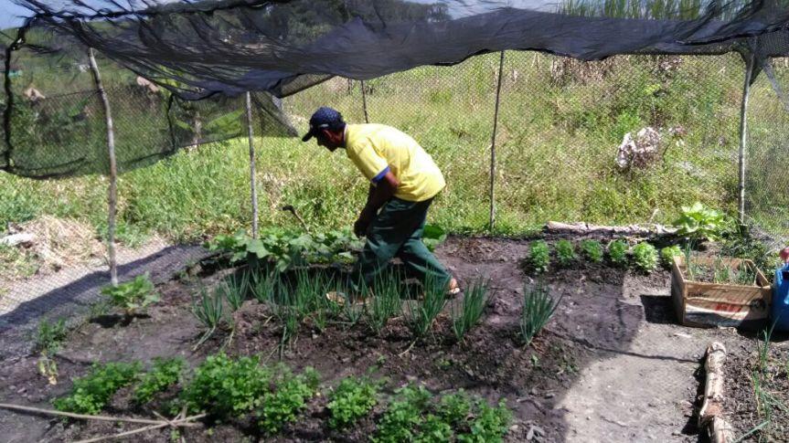 Escola Padre Geraldo decide ampliar produção em hortacomunitária