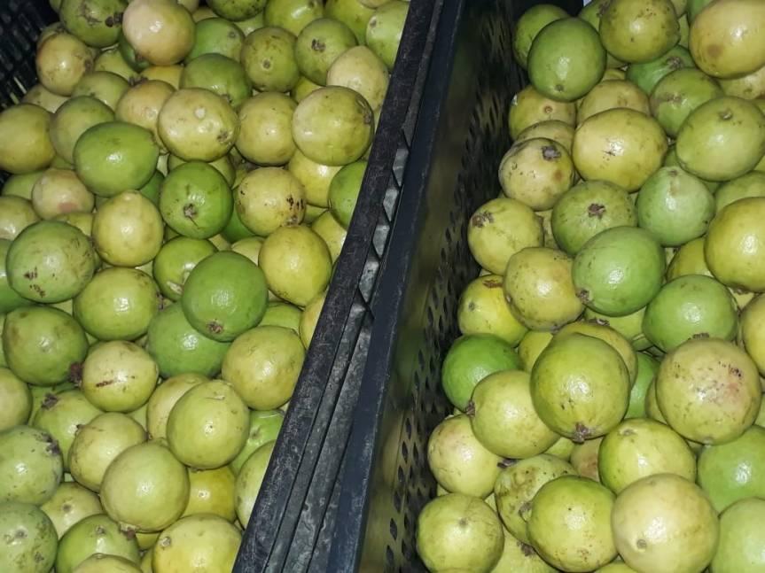 Merenda garante alimentação saudável nas escolas deEscada