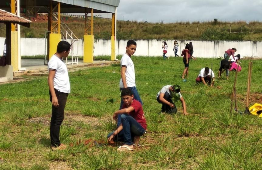 Escola Cícero Dias recebe mudas deIpê